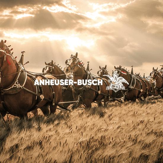 Anheuser-Busch logo graphic